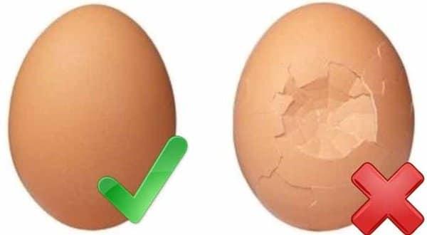 Bahaya Telur Retak dan Bakteri yang Dikandungnya